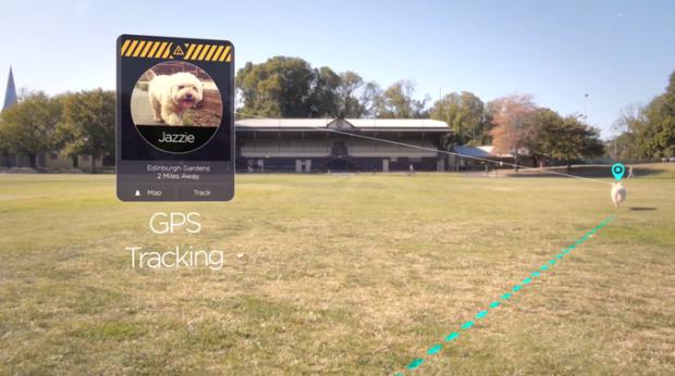 狗脖子上的 「Apple Watch」 助你智能養狗